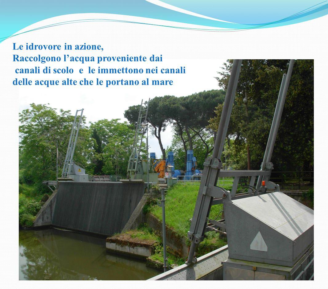 Le idrovore in azione, Raccolgono lacqua proveniente dai canali di scolo e le immettono nei canali delle acque alte che le portano al mare