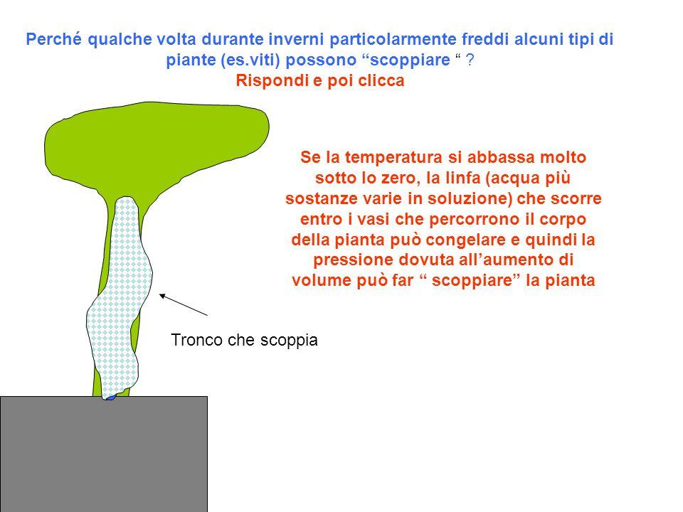 Perché qualche volta durante inverni particolarmente freddi alcuni tipi di piante (es.viti) possono scoppiare .