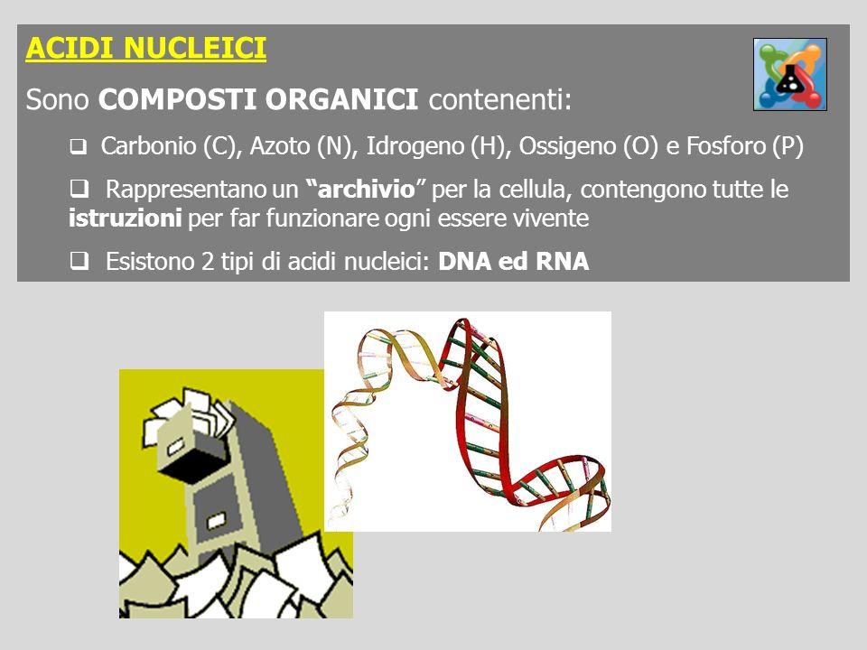 ACIDI NUCLEICI Sono COMPOSTI ORGANICI contenenti: Carbonio (C), Azoto (N), Idrogeno (H), Ossigeno (O) e Fosforo (P) Rappresentano un archivio per la c