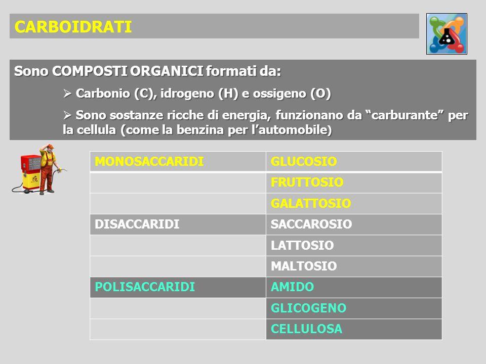 CARBOIDRATI Sono COMPOSTI ORGANICI formati da: Carbonio (C), idrogeno (H) e ossigeno (O) Carbonio (C), idrogeno (H) e ossigeno (O) Sono sostanze ricch