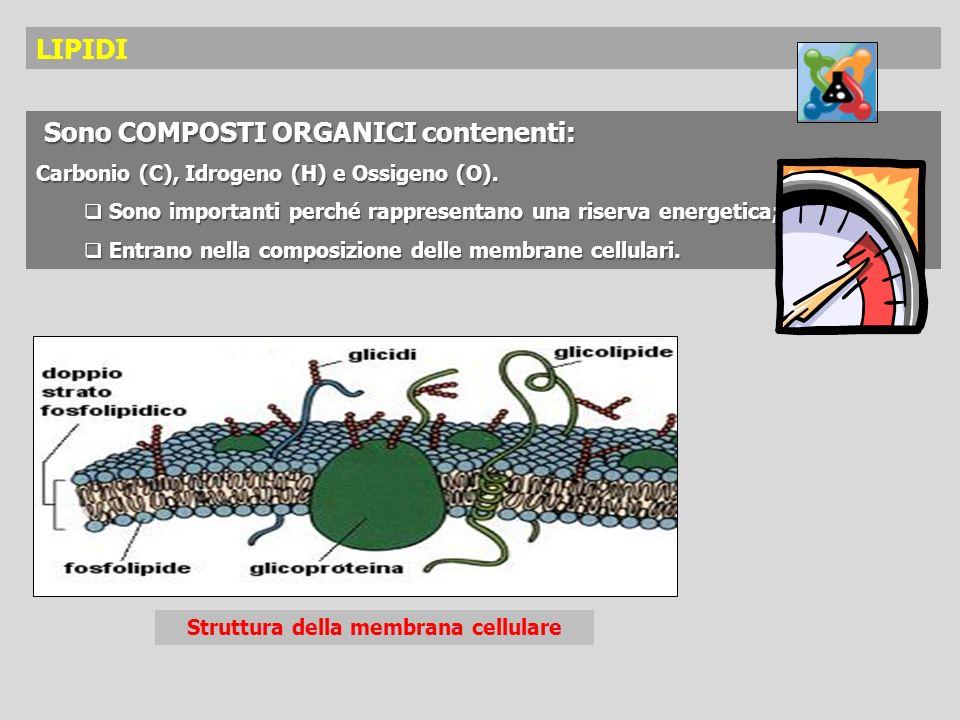 Sono COMPOSTI ORGANICI contenenti: Sono COMPOSTI ORGANICI contenenti: Carbonio (C), Idrogeno (H) e Ossigeno (O). Sono importanti perché rappresentano