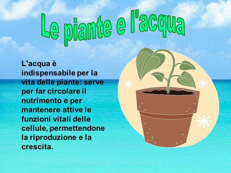 L'acqua è indispensabile per la vita delle piante: serve per far circolare il nutrimento e per mantenere attive le funzioni vitali delle cellule, perm