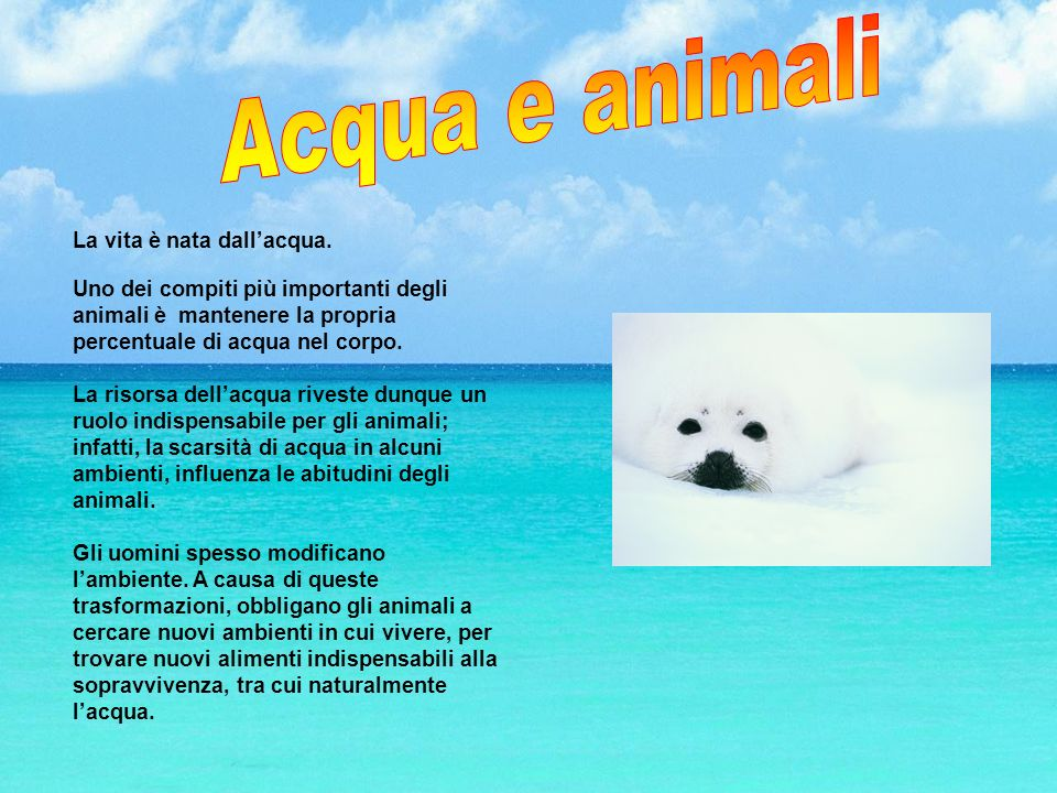 La vita è nata dallacqua. Uno dei compiti più importanti degli animali è mantenere la propria percentuale di acqua nel corpo. La risorsa dellacqua riv