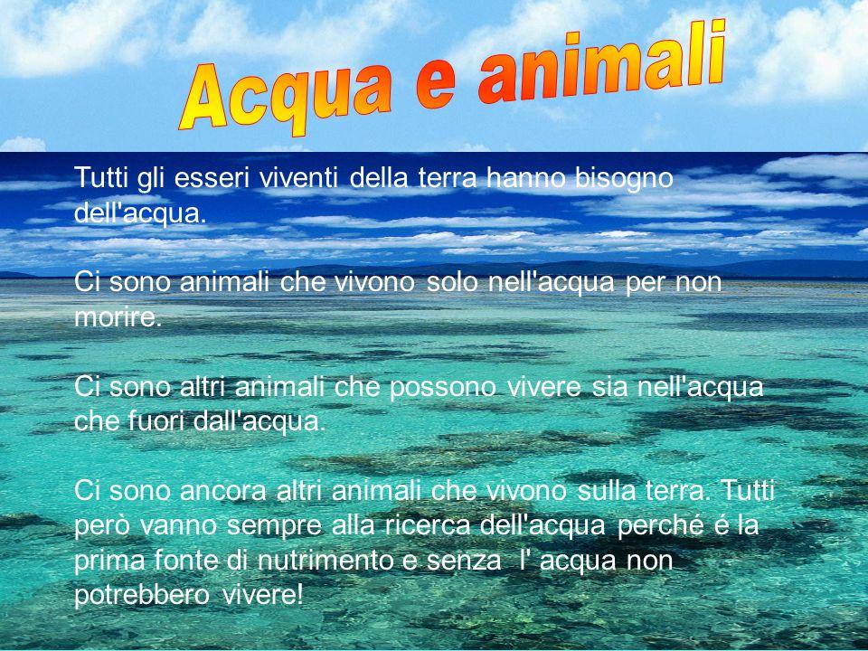 Tutti gli esseri viventi della terra hanno bisogno dell'acqua. Ci sono animali che vivono solo nell'acqua per non morire. Ci sono altri animali che po