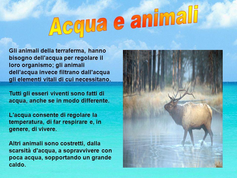 Gli animali della terraferma, hanno bisogno dell'acqua per regolare il loro organismo; gli animali dell'acqua invece filtrano dall'acqua gli elementi