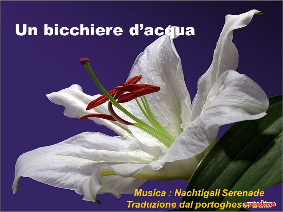 Musica : Nachtigall Serenade Traduzione dal portoghese: Lulu Un bicchiere dacqua