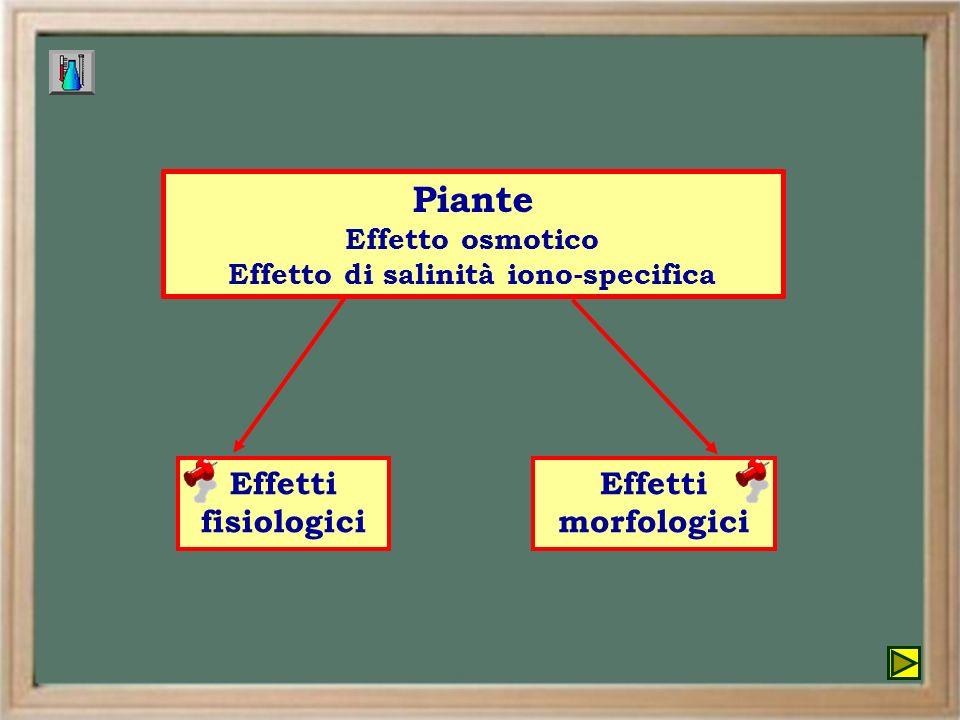 Piante Effetto osmotico Effetto di salinità iono-specifica Effetti fisiologici Effetti morfologici