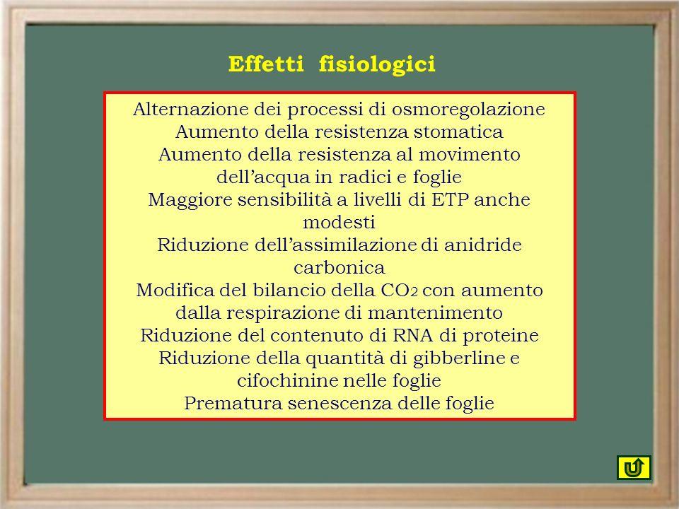 Alternazione dei processi di osmoregolazione Aumento della resistenza stomatica Aumento della resistenza al movimento dellacqua in radici e foglie Mag