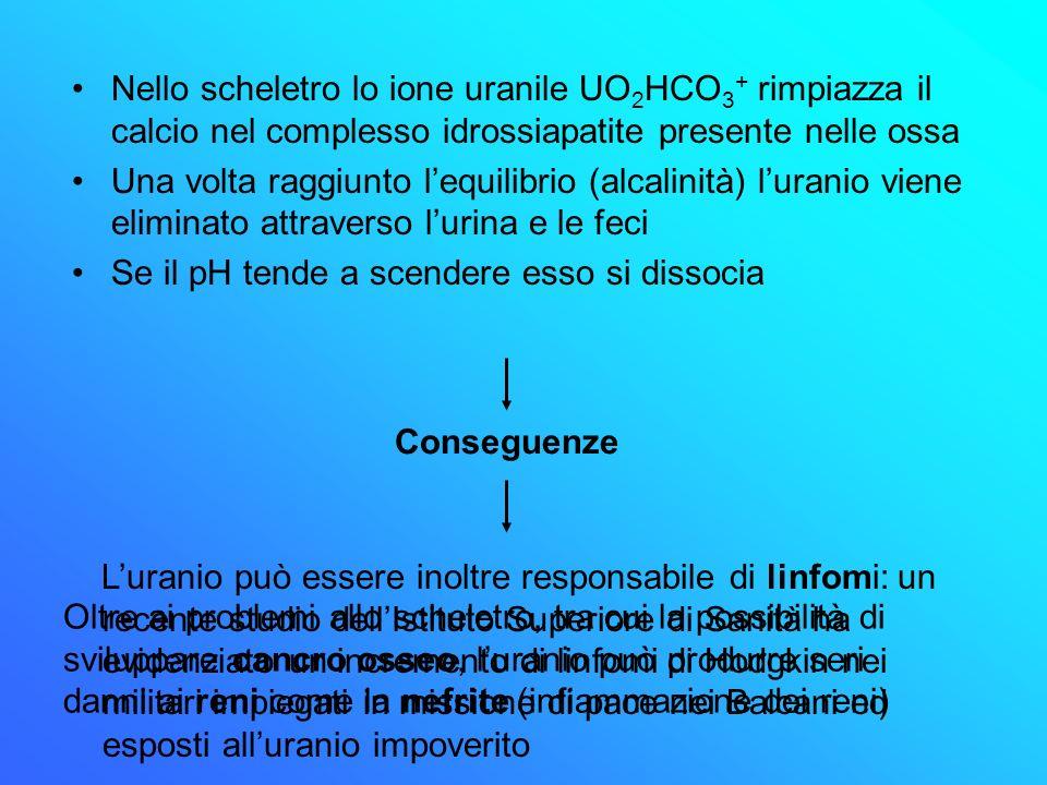 Nello scheletro lo ione uranile UO 2 HCO 3 + rimpiazza il calcio nel complesso idrossiapatite presente nelle ossa Una volta raggiunto lequilibrio (alc