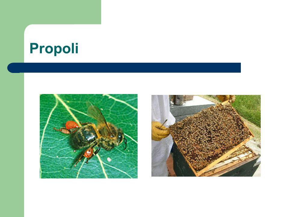 Propoli