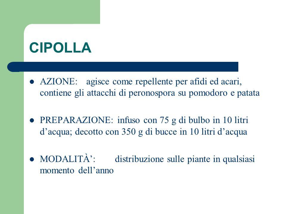 CIPOLLA AZIONE: agisce come repellente per afidi ed acari, contiene gli attacchi di peronospora su pomodoro e patata PREPARAZIONE: infuso con 75 g di