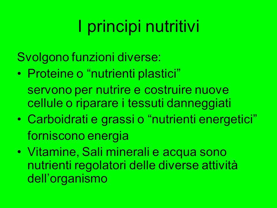 I principi nutritivi Svolgono funzioni diverse: Proteine o nutrienti plastici servono per nutrire e costruire nuove cellule o riparare i tessuti danne