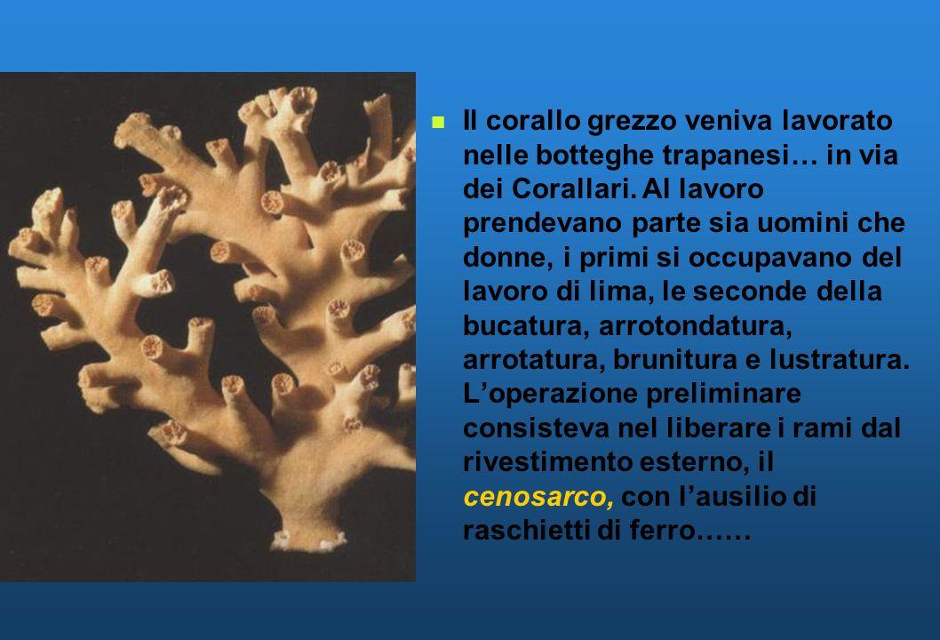 Il corallo grezzo veniva lavorato nelle botteghe trapanesi… in via dei Corallari. Al lavoro prendevano parte sia uomini che donne, i primi si occupava