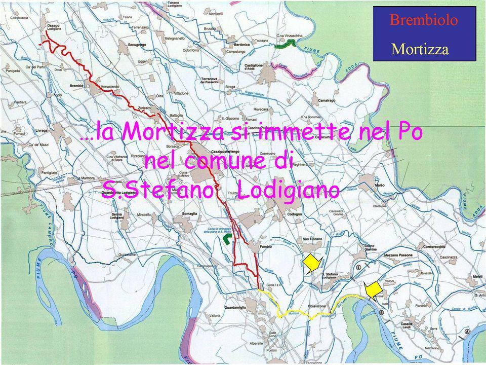 Scuola Media Griffini A.S. 2008-2009 Classi 1^C & 2^C …la Mortizza si immette nel Po nel comune di S.Stefano Lodigiano
