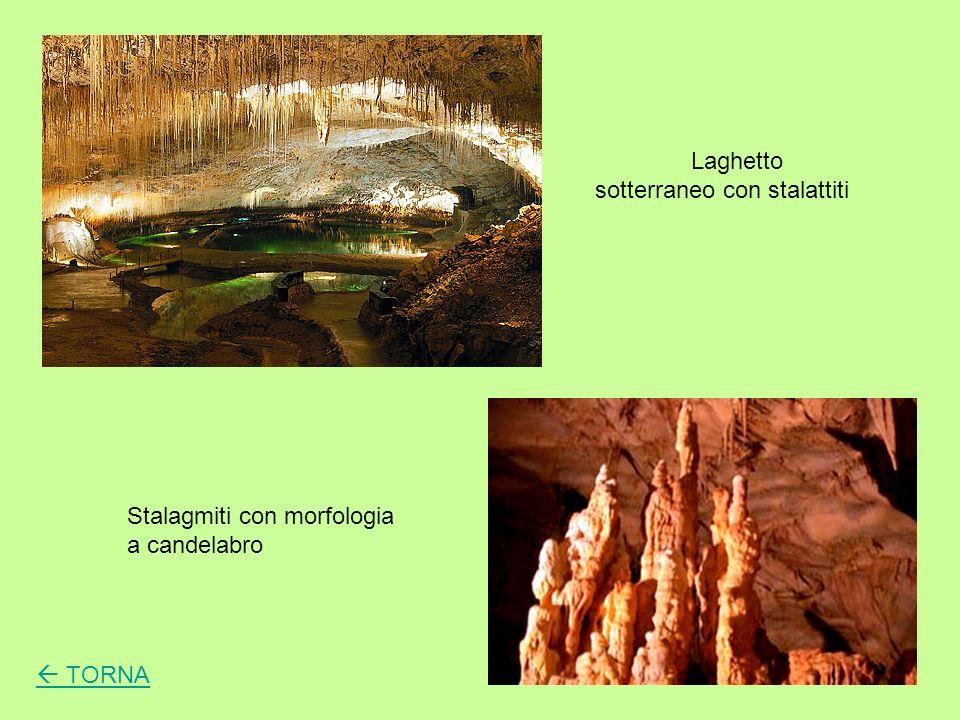 Laghetto sotterraneo con stalattiti Stalagmiti con morfologia a candelabro TORNA