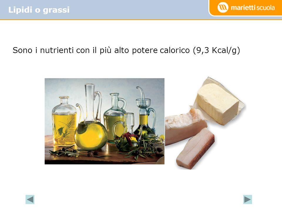 Sono i nutrienti con il più alto potere calorico (9,3 Kcal/g) Lipidi o grassi