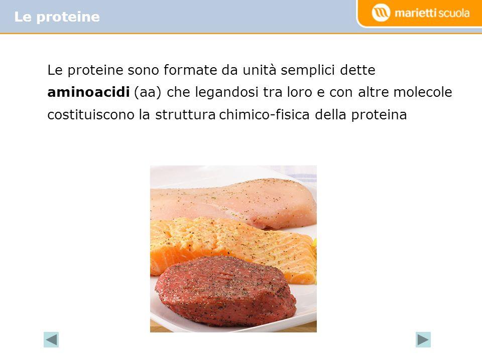 Le proteine sono formate da unità semplici dette aminoacidi (aa) che legandosi tra loro e con altre molecole costituiscono la struttura chimico-fisica della proteina Le proteine
