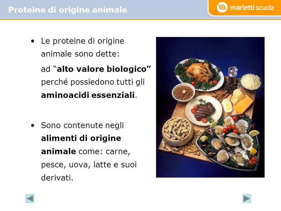 Le proteine di origine animale sono dette: ad alto valore biologico perché possiedono tutti gli aminoacidi essenziali.