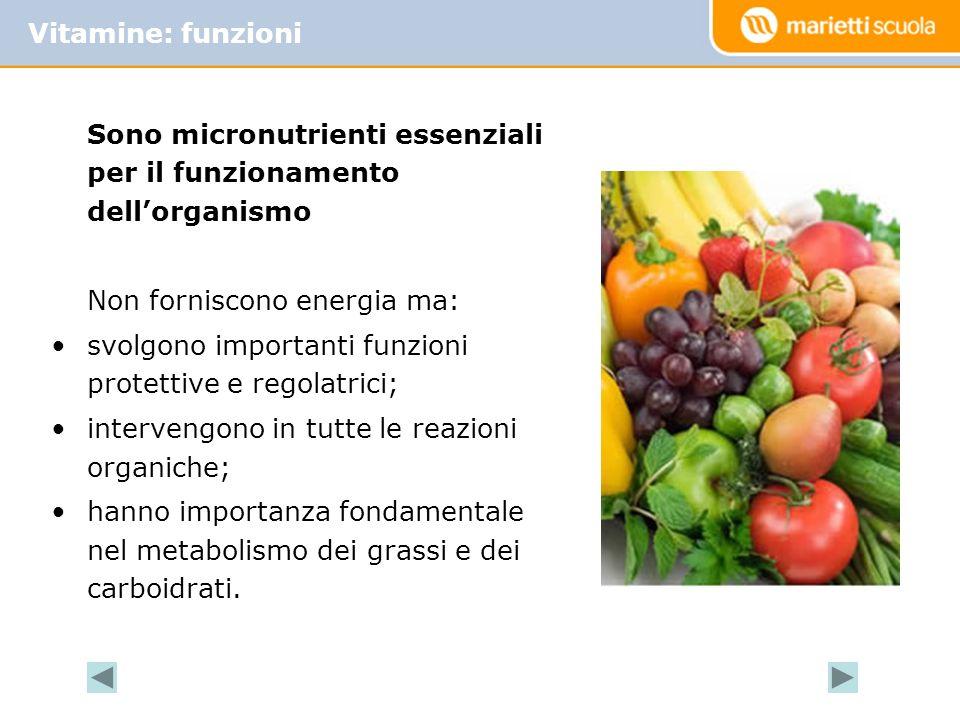 Sono micronutrienti essenziali per il funzionamento dellorganismo Non forniscono energia ma: svolgono importanti funzioni protettive e regolatrici; intervengono in tutte le reazioni organiche; hanno importanza fondamentale nel metabolismo dei grassi e dei carboidrati.