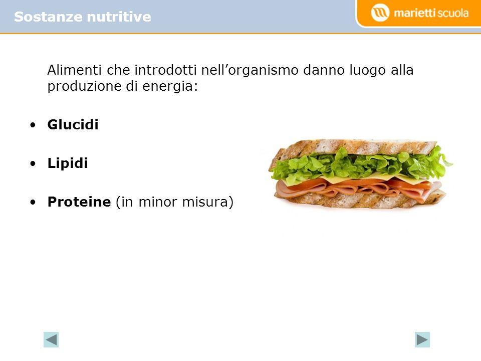 Alimenti che introdotti nellorganismo danno luogo alla produzione di energia: Glucidi Lipidi Proteine (in minor misura) Sostanze nutritive
