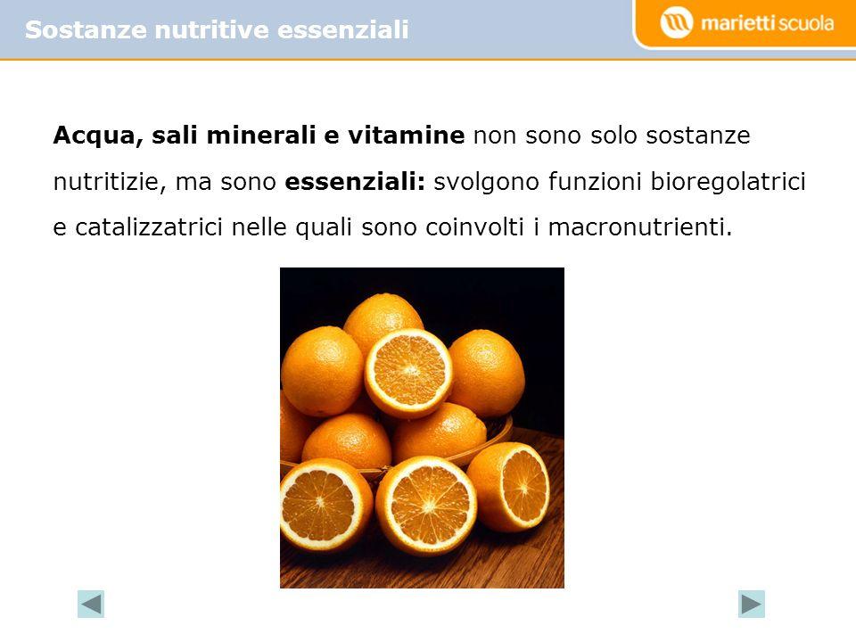 Acqua, sali minerali e vitamine non sono solo sostanze nutritizie, ma sono essenziali: svolgono funzioni bioregolatrici e catalizzatrici nelle quali sono coinvolti i macronutrienti.