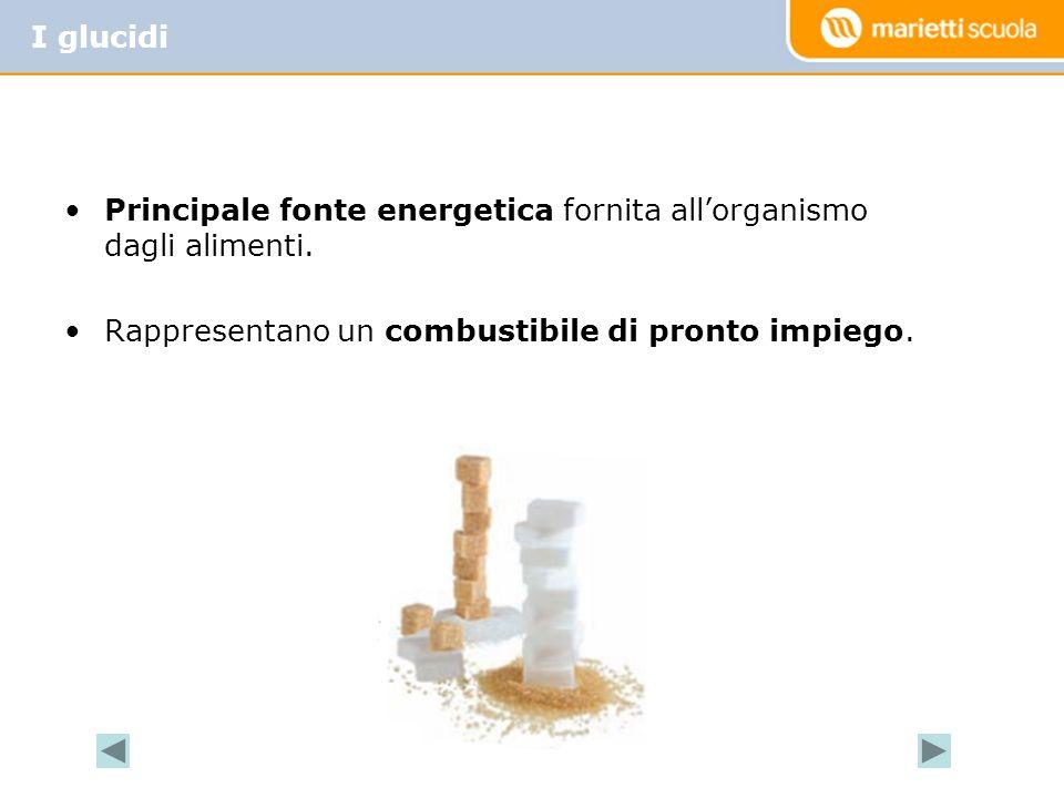 Glucidi semplici (monosaccaridi): sono digeriti velocemente e rappresentano per lorganismo lenergia di pronto impiego.