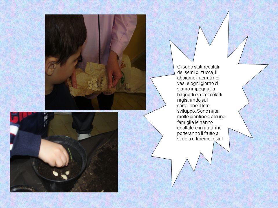 Ci sono stati regalati dei semi di zucca, li abbiamo interrati nei vasi e ogni giorno ci siamo impegnati a bagnarli e a coccolarli registrando sul car