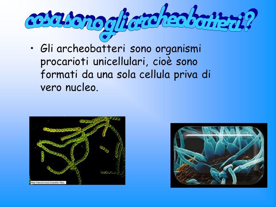 Gli archeobatteri sono organismi procarioti unicellulari, cioè sono formati da una sola cellula priva di vero nucleo.