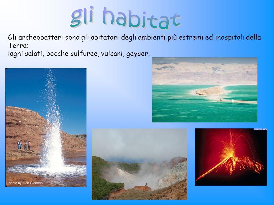 Gli archeobatteri sono gli abitatori degli ambienti più estremi ed inospitali della Terra: laghi salati, bocche sulfuree, vulcani, geyser.