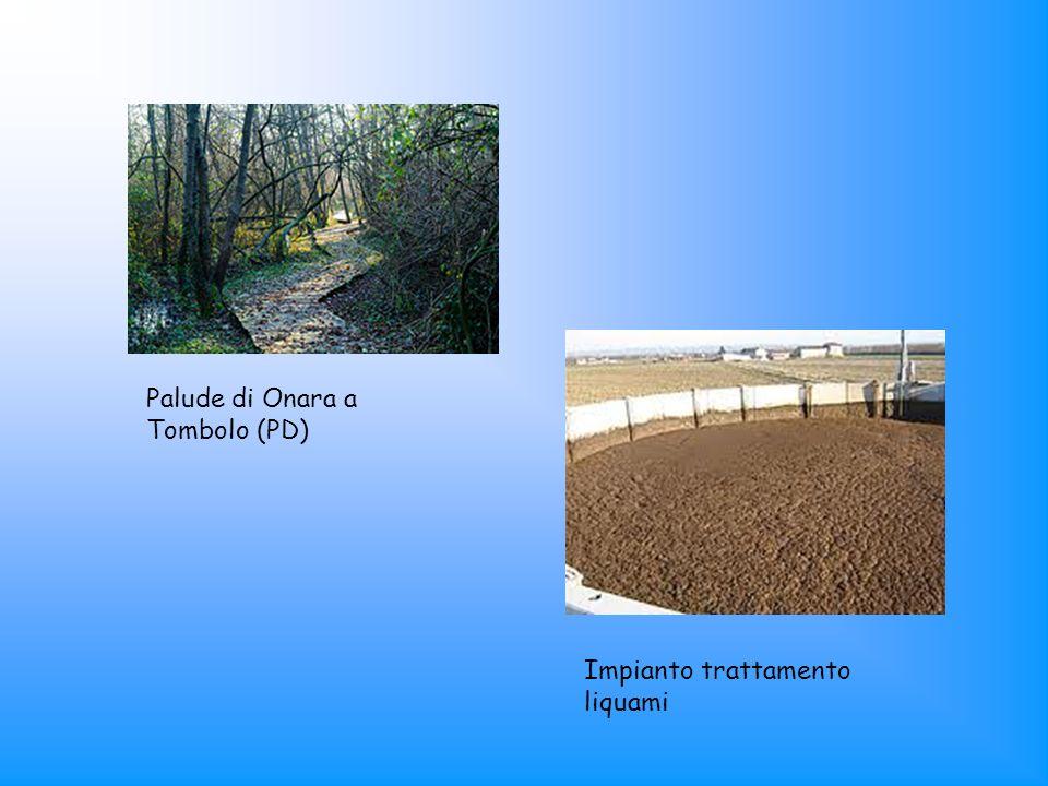 Palude di Onara a Tombolo (PD) Impianto trattamento liquami