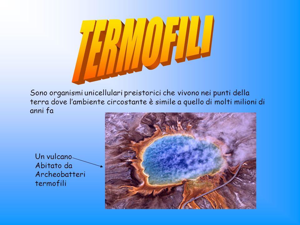 Sono organismi unicellulari preistorici che vivono nei punti della terra dove lambiente circostante è simile a quello di molti milioni di anni fa Un v