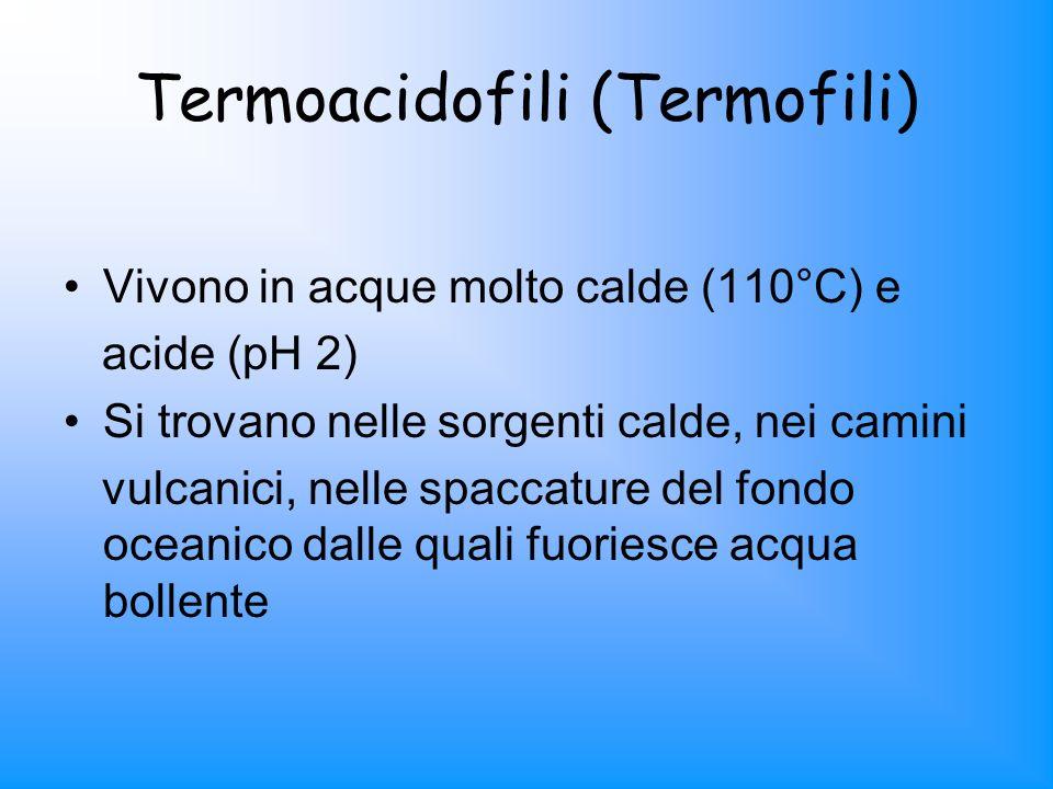 Termoacidofili (Termofili) Vivono in acque molto calde (110°C) e acide (pH 2) Si trovano nelle sorgenti calde, nei camini vulcanici, nelle spaccature
