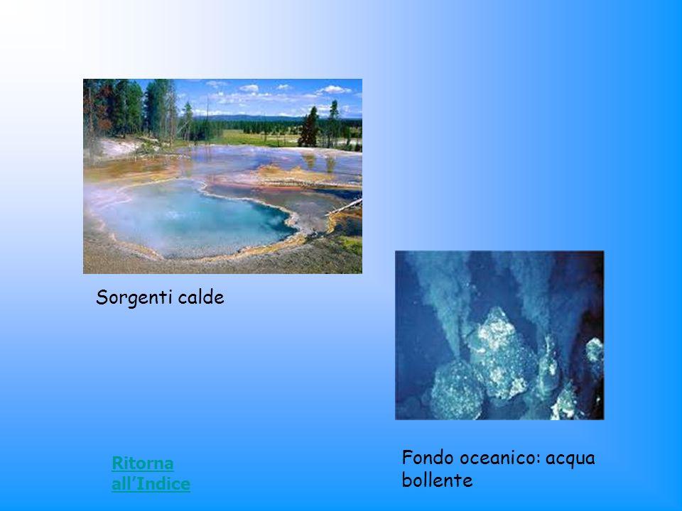 Sorgenti calde Fondo oceanico: acqua bollente Ritorna allIndice