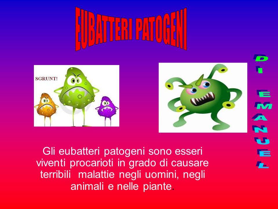 Gli eubatteri patogeni sono esseri viventi procarioti in grado di causare terribili malattie negli uomini, negli animali e nelle piante.