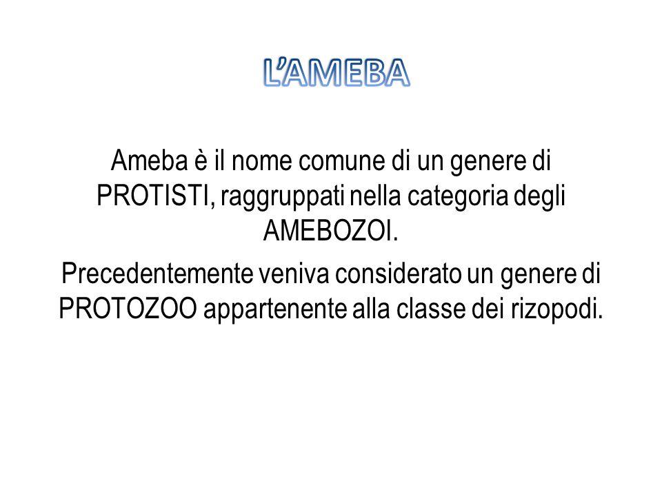 Ameba è il nome comune di un genere di PROTISTI, raggruppati nella categoria degli AMEBOZOI. Precedentemente veniva considerato un genere di PROTOZOO