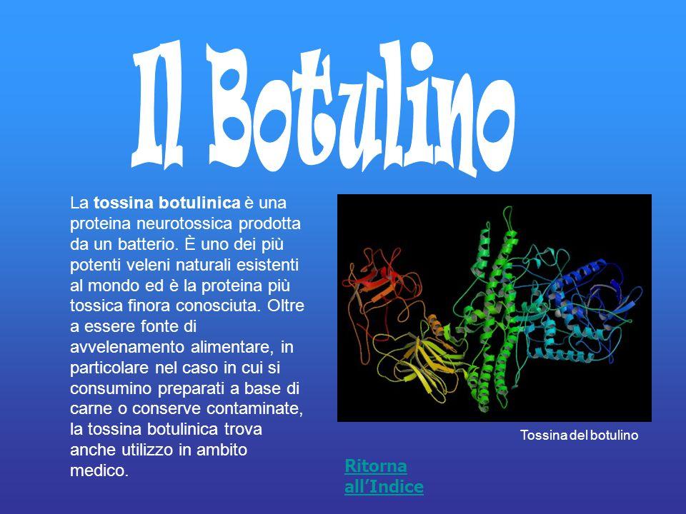 La tossina botulinica è una proteina neurotossica prodotta da un batterio. È uno dei più potenti veleni naturali esistenti al mondo ed è la proteina p