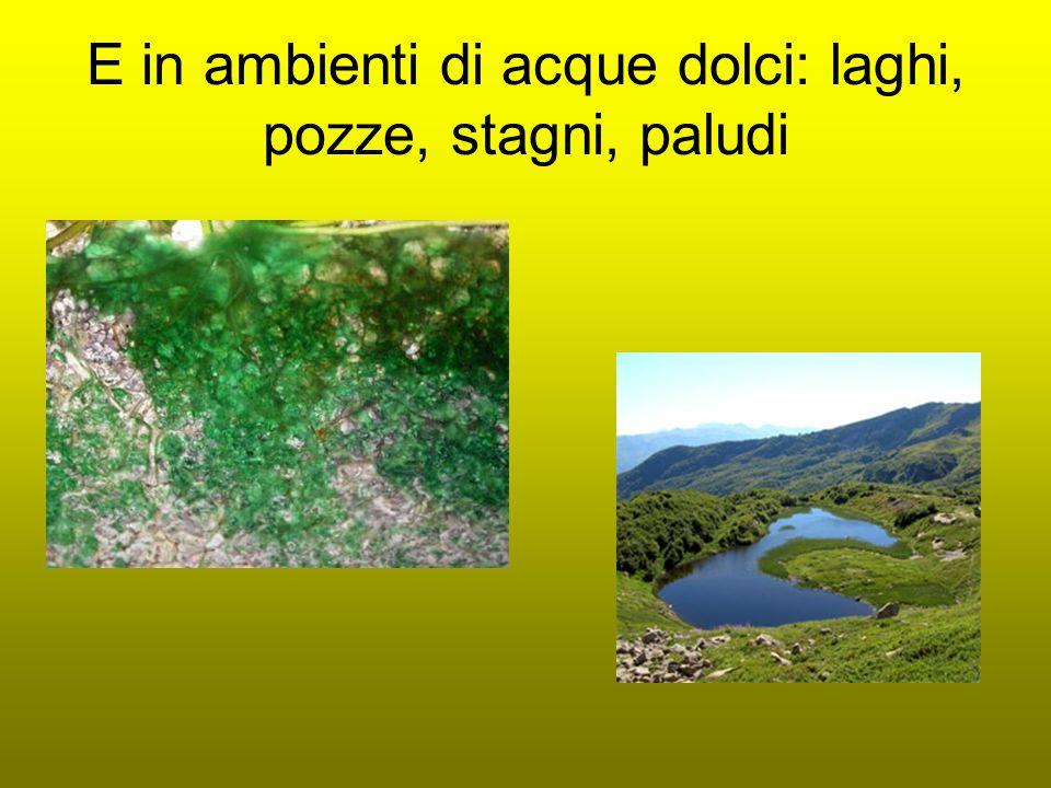 E in ambienti di acque dolci: laghi, pozze, stagni, paludi