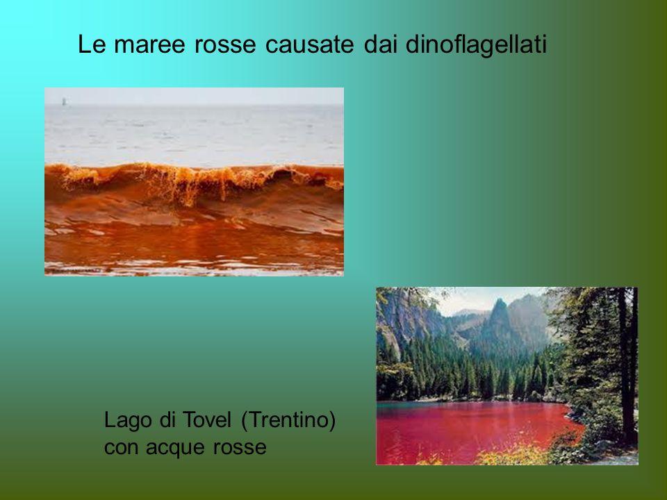 Le maree rosse causate dai dinoflagellati Lago di Tovel (Trentino) con acque rosse