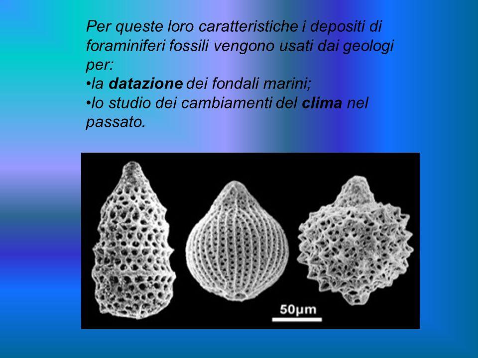 Per queste loro caratteristiche i depositi di foraminiferi fossili vengono usati dai geologi per: la datazione dei fondali marini; lo studio dei cambi