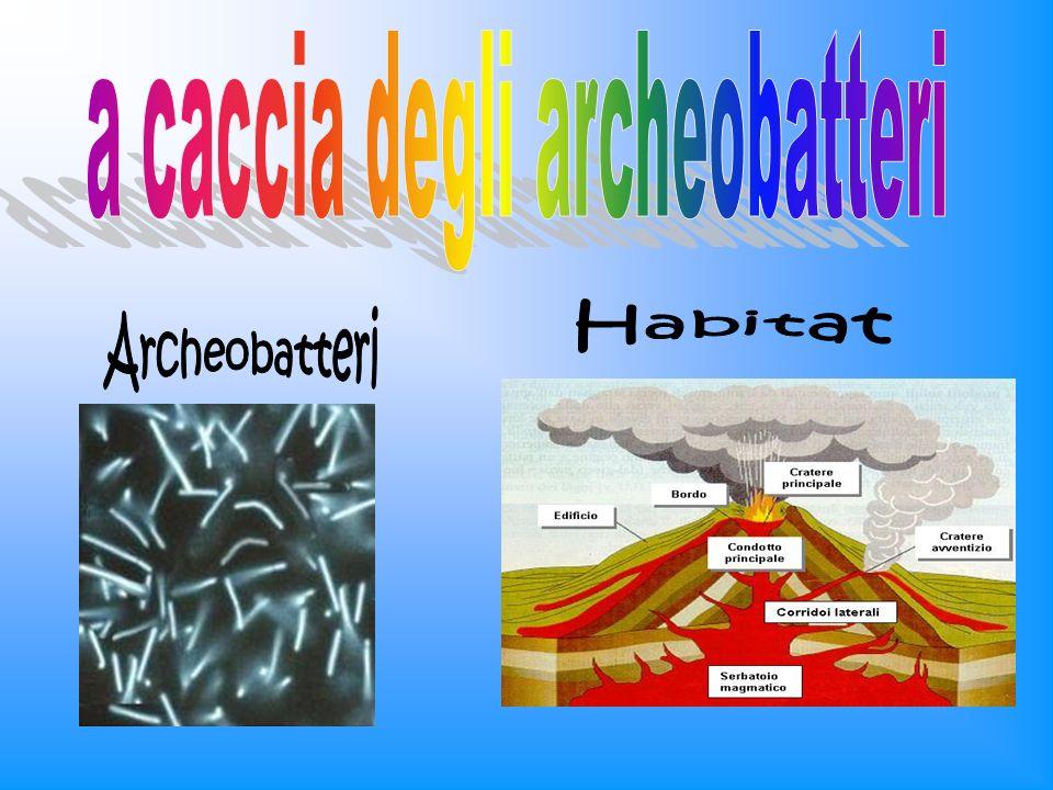 Diatomee centrali e pennate