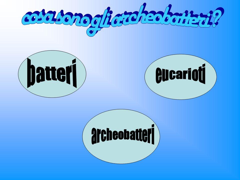 Gli alobatteri sono un genere di Archeobatteri