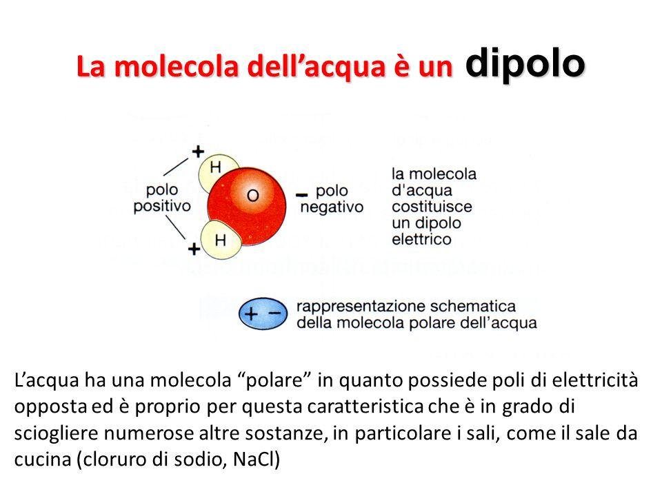 La molecola dellacqua è un dipolo Lacqua ha una molecola polare in quanto possiede poli di elettricità opposta ed è proprio per questa caratteristica