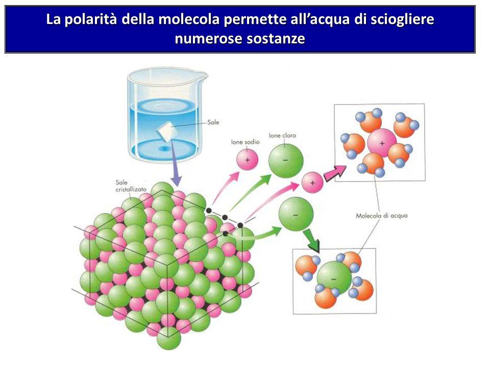 La polarità della molecola permette allacqua di sciogliere numerose sostanze