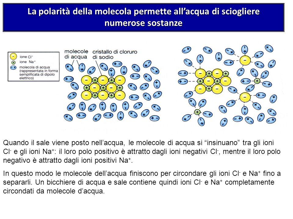 Quando il sale viene posto nellacqua, le molecole di acqua si insinuano tra gli ioni Cl - e gli ioni Na + : il loro polo positivo è attratto dagli ion