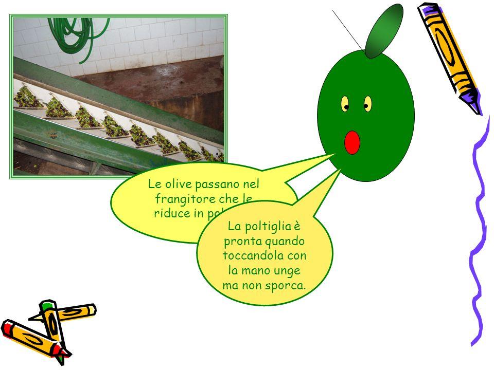 Le olive passano nel frangitore che le riduce in poltiglia La poltiglia è pronta quando toccandola con la mano unge ma non sporca.