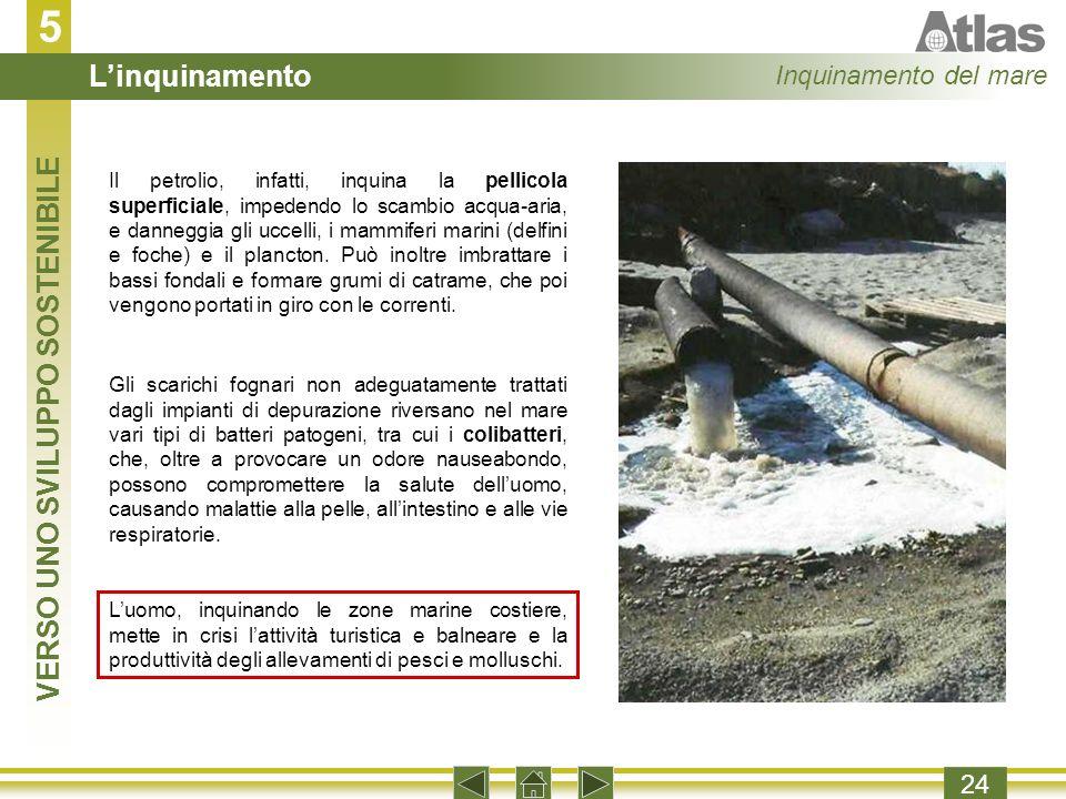 5 24 Il petrolio, infatti, inquina la pellicola superficiale, impedendo lo scambio acqua-aria, e danneggia gli uccelli, i mammiferi marini (delfini e foche) e il plancton.