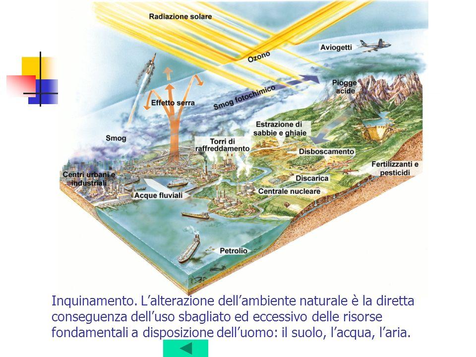 Salvare lorso Un tempo in Italia viveva una popolazione consistente di Orsi Marsicani.Vivevano in pace nelle loro foreste, con cibo in abbondanza e poche minacce.