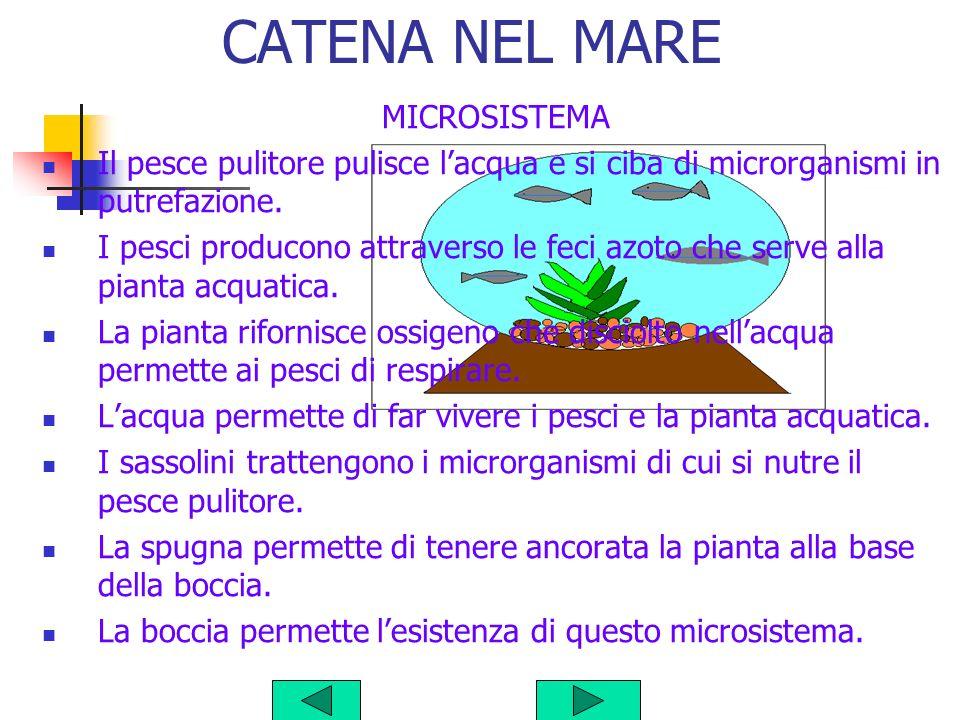 CATENA NEL MARE MICROSISTEMA Il pesce pulitore pulisce lacqua e si ciba di microrganismi in putrefazione.