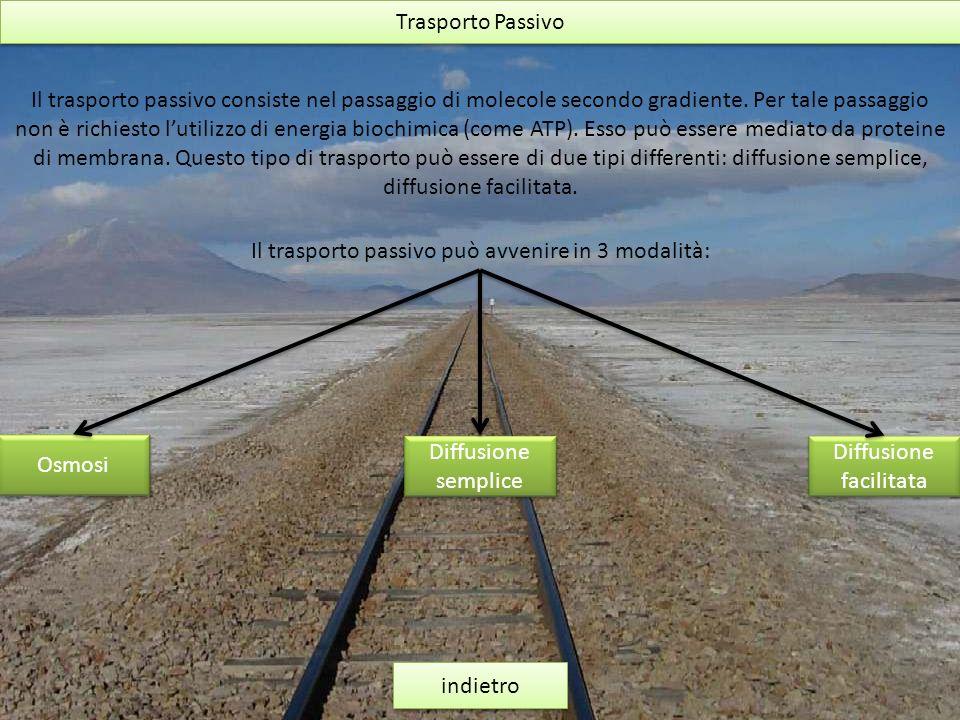 Trasporto Passivo indietro Il trasporto passivo consiste nel passaggio di molecole secondo gradiente. Per tale passaggio non è richiesto lutilizzo di
