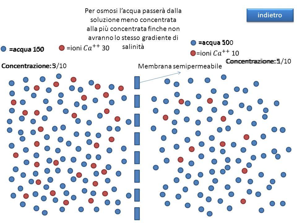 Per osmosi lacqua passerà dalla soluzione meno concentrata alla più concentrata finche non avranno lo stesso gradiente di salinità Membrana semipermea